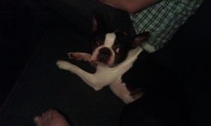 comfy dog