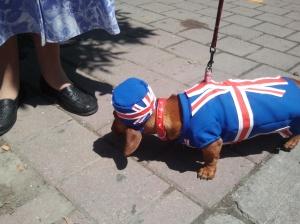 british weiner dog