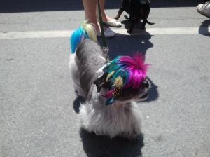 rainbow brite dog