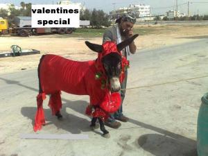 valentines day mule