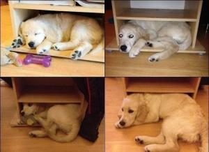 growing up dog
